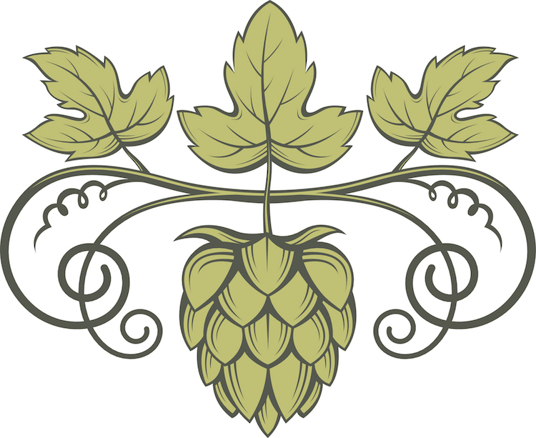 Banner image for Which hops varietal is the most popular among craft brewers in the US?